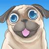 Pug the dog