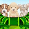 Opieka nad szczeniakami i…